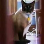 cat_burglar2